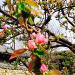 2016春 (2)