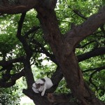 島のネコたち