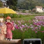醤の郷花畑
